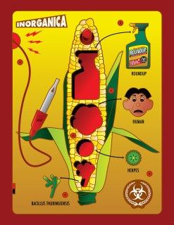Operation Corn