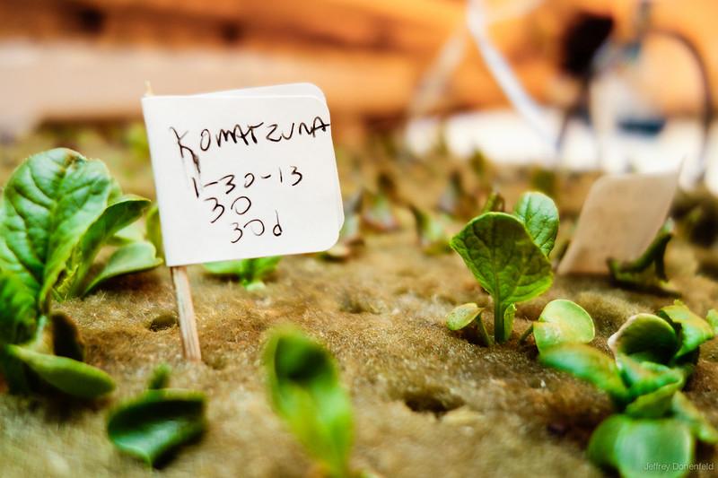 2013-02-08 Greenhouse - DSC06946-2000-90