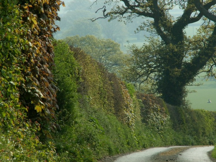 21stapr2007 ancient hedgerow