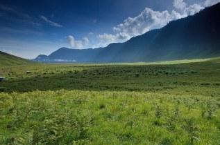 Savannah - Bromo Tengger Semeru National Park