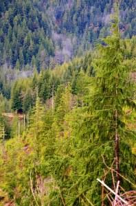 Oregon Coast Photos