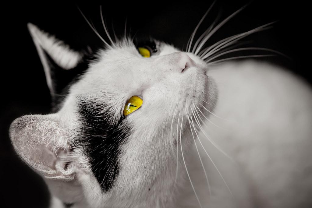 雙連的街貓.~☆牛奶 ~ Milk ☆~. | 檔名File name: 雙連的街貓-牛奶﹝CAT-00034﹞ 英名E… | Flickr
