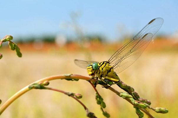 The Dragonfly Sleeps