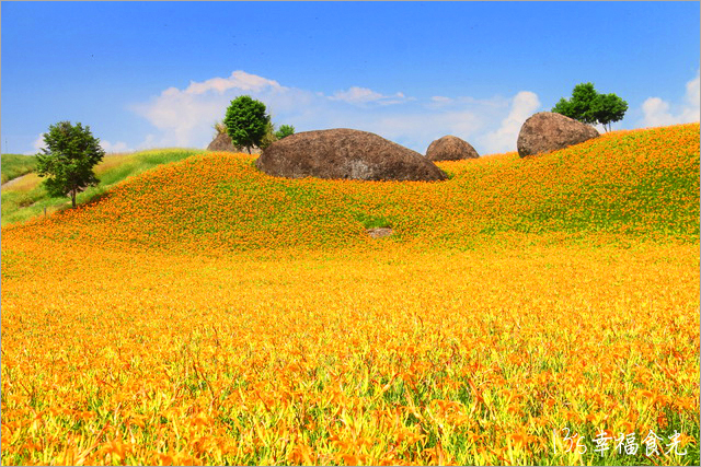 13S_HLS_CO14 | 【花蓮赤柯山金針花】2016花蓮金針花季-赤柯山金針花拍照景點-赤柯山三顆巨石-2016金… | Flickr
