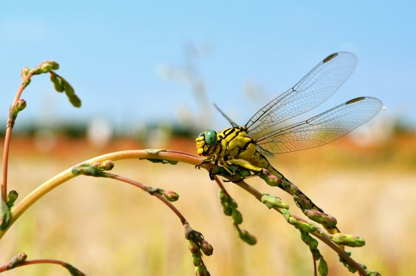The Dragonfly Rests