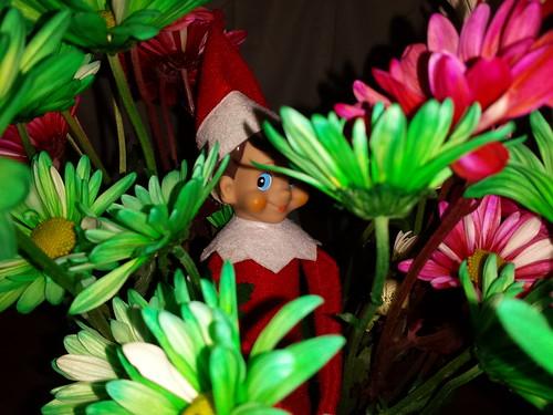 341/365 [2014] - Elf in the Flowers