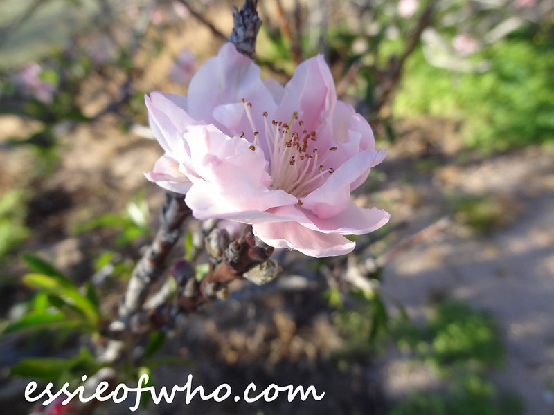 March 2015 Nature Photos
