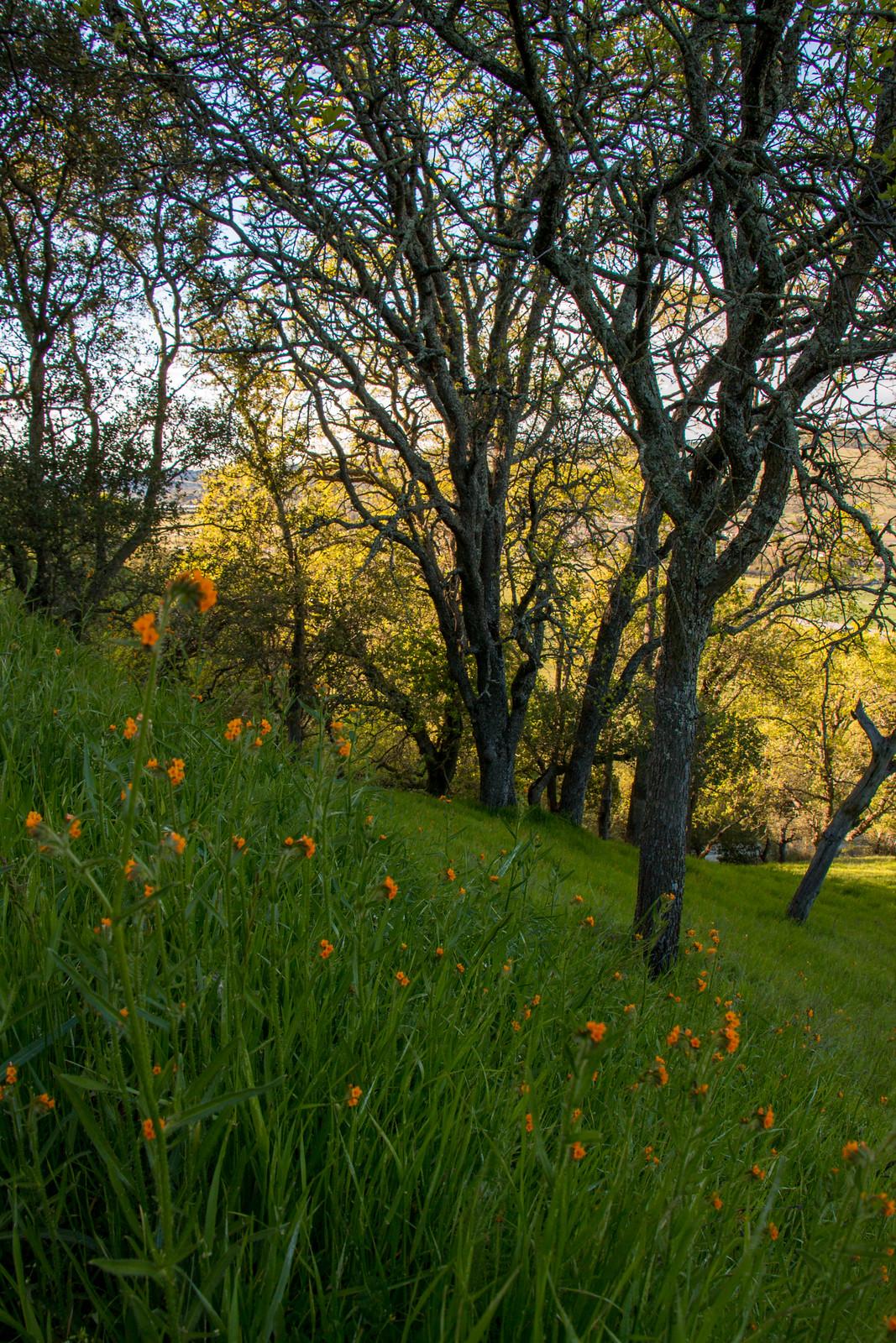 03.25. Rancho San Vicente