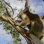 Viajefilos en Australia. GOR  082
