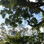 14 Viajefilos en Sri Lanka. Yala 08