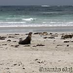 Viajefilos en Australia. Kangaroo 11
