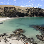 Viajefilos en Australia. Kangaroo 86