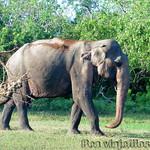Viajefilos en Sri Lanka 015