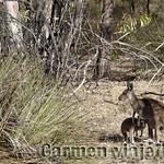 Viajefilos en Australia. Adelaida 38