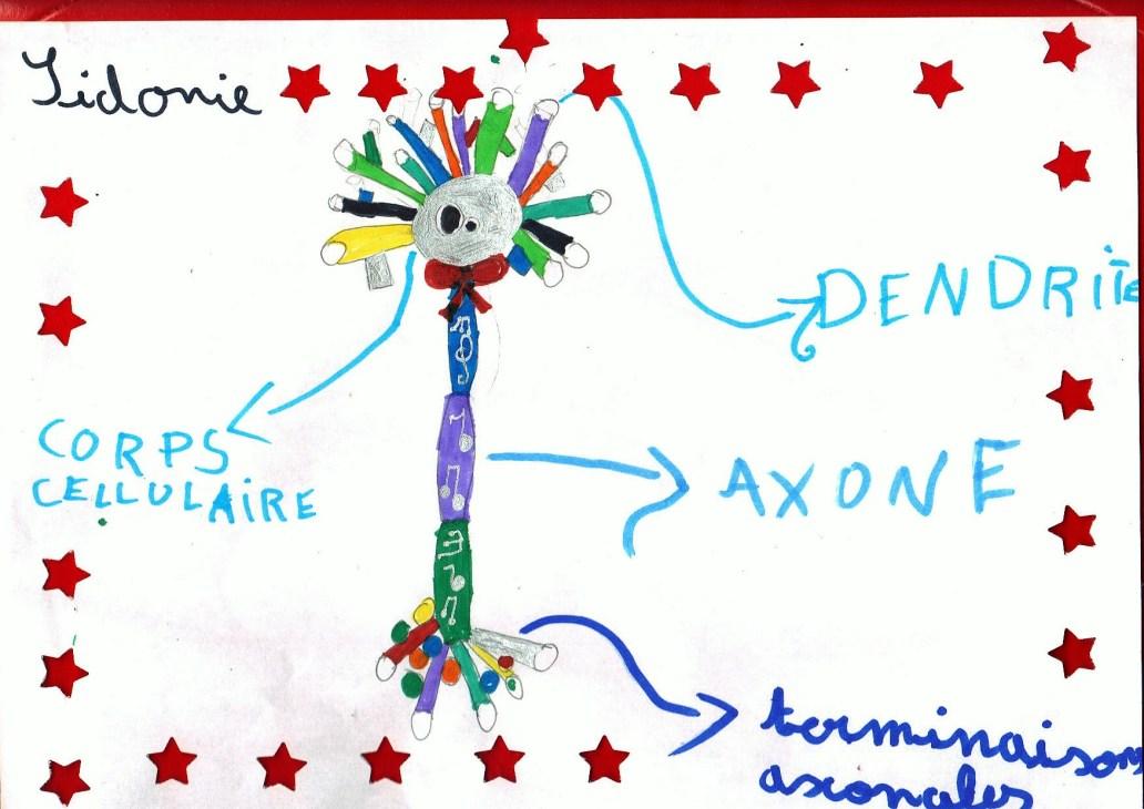 Neurone musical légendé - dans les temps périscolaires avec Les Savanturiers et la Mairie de Paris.