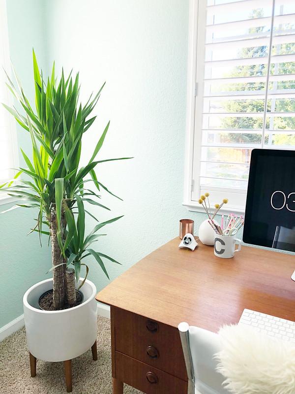 Plant and desk corner