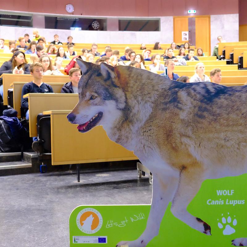 SchülerUNI: Wolfspirit - Let´s get wild