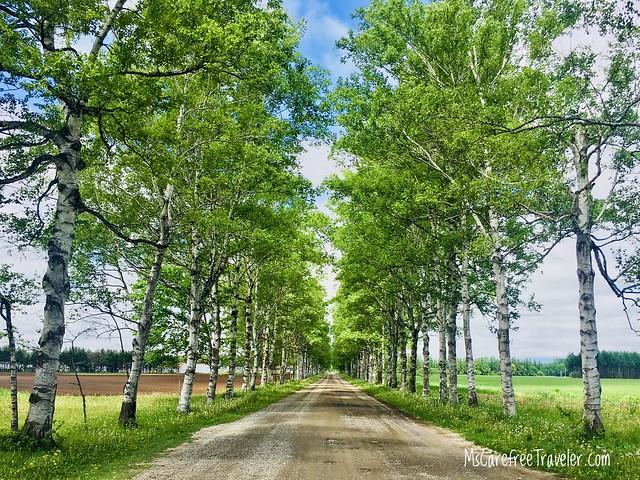 Birch-lined Road Tokachi Ranch Hokkaido Japan