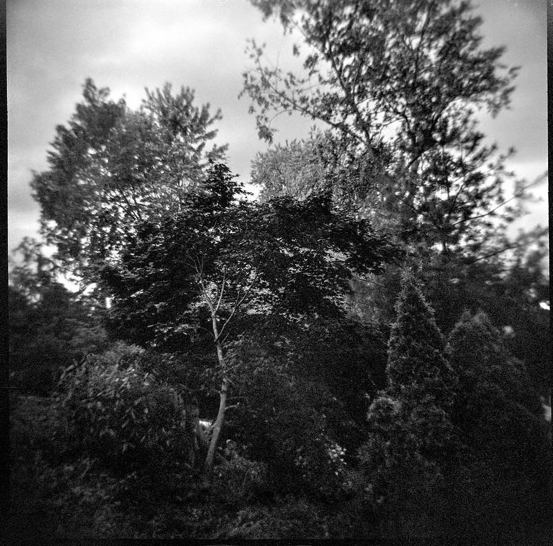cultivated landscape, forest edge, Asheville, North Carolina, Diana F+, Kodak TMAX 400, Ilford Ilfosol 3 developer, 5.15.18