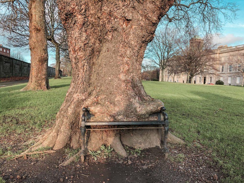 The Hungry Tree, King's Inn Park, Dublin, Ireland