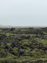 Lava and Moss, Iceland