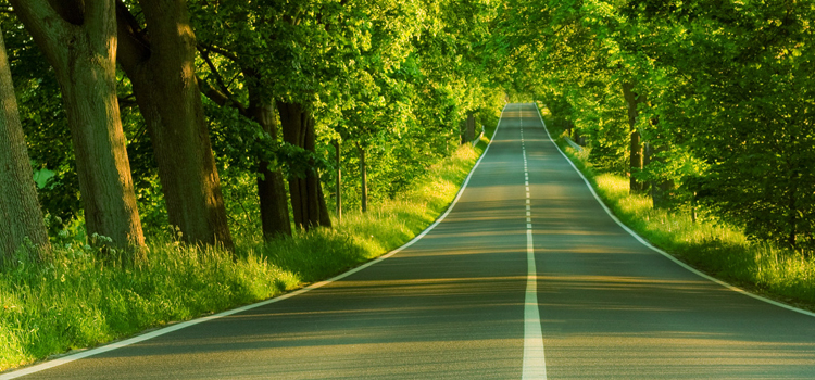 go rving, picture of the open road in a tunnel of trees