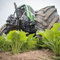 The Sugar Beet Harvest- an Unbeatable Experience
