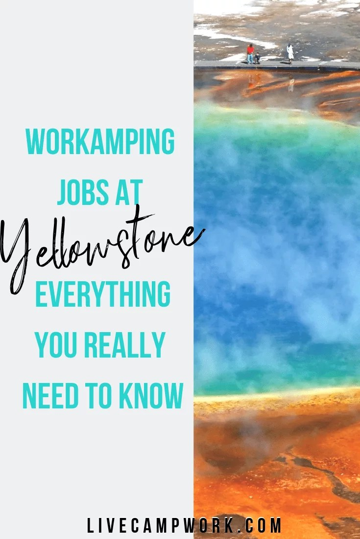 Everything you need to know about Workamping at Yellowstone this summer with or without an RV! Get details about compensation, camping, positions and more!