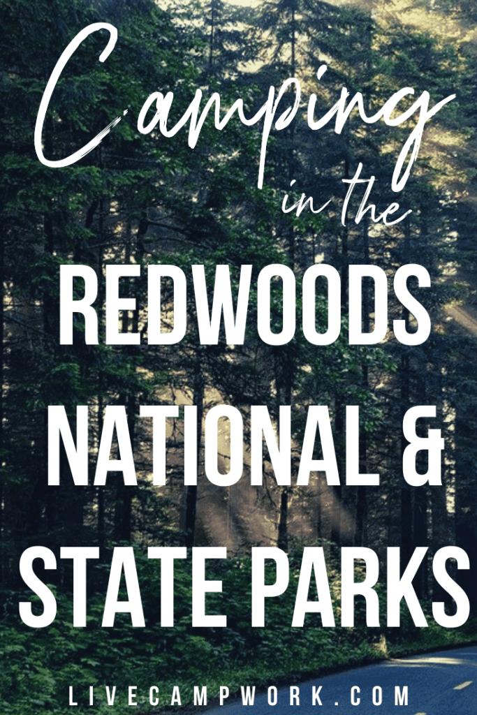 Redwoods National Park Camping