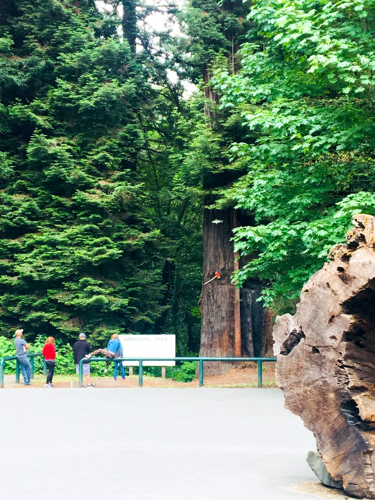 Camping Avenue of the Giants
