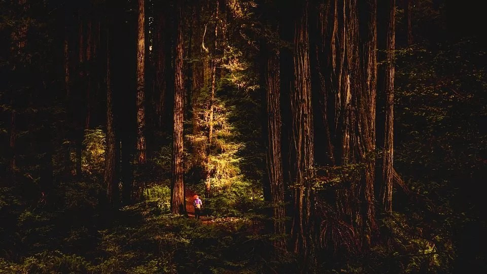 Backcountry Camping in the Redwoods