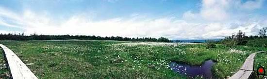 田代山山頂部の湿原(東側)の写真