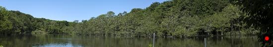 井頭公園の鳥達の写真
