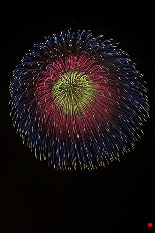 和的配色の打ち上げ花火の写真
