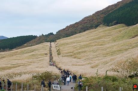 仙石原すすき草原入り口付近の写真