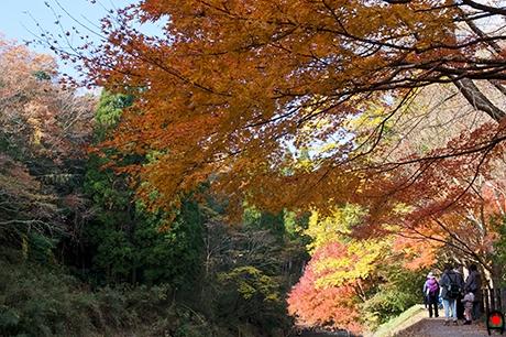 養老渓谷の紅葉の写真