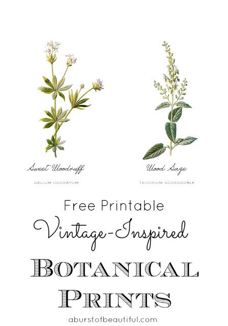 Vintage Botanical Prints_Powder Room