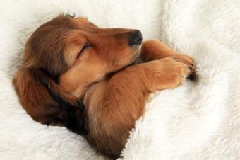 犬が寝ている