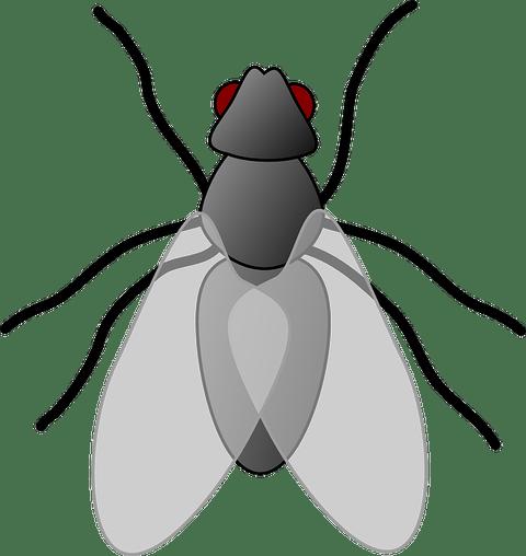 house-fly-24629_640