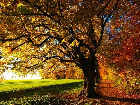 tree-779827_640