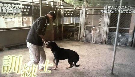 nhk-professional-dog-trainernakamura2