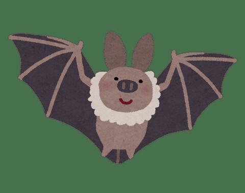 animal_koumori