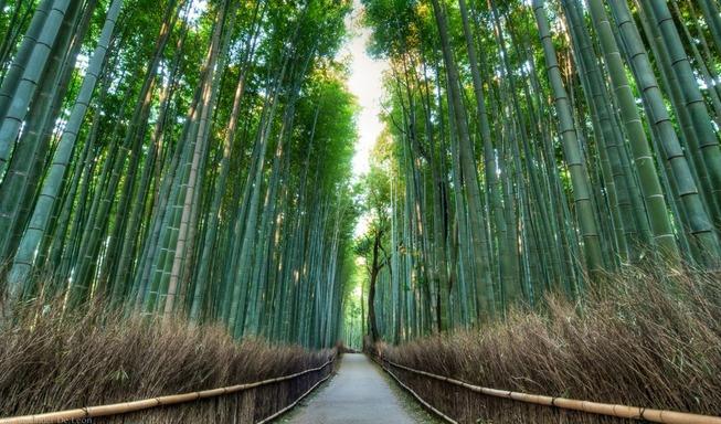 arashiyama-bamboo-forest-1020x600