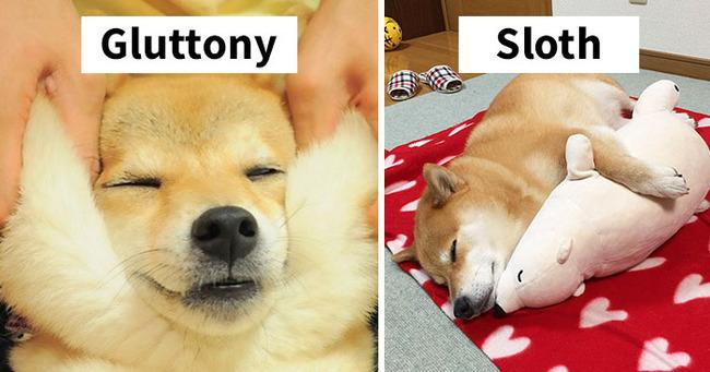 funny-cute-shiba-inu-dog-seven-deadly-sins-coverimage