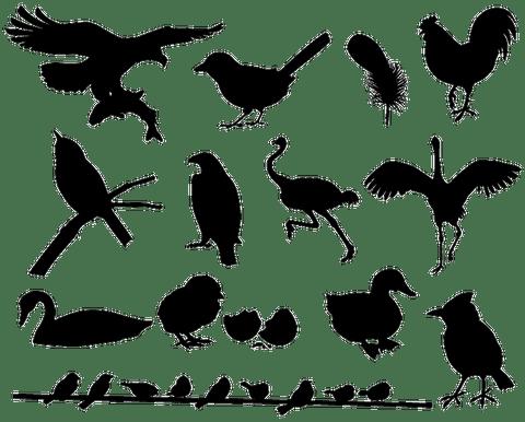 bird-silhouette-free1-770