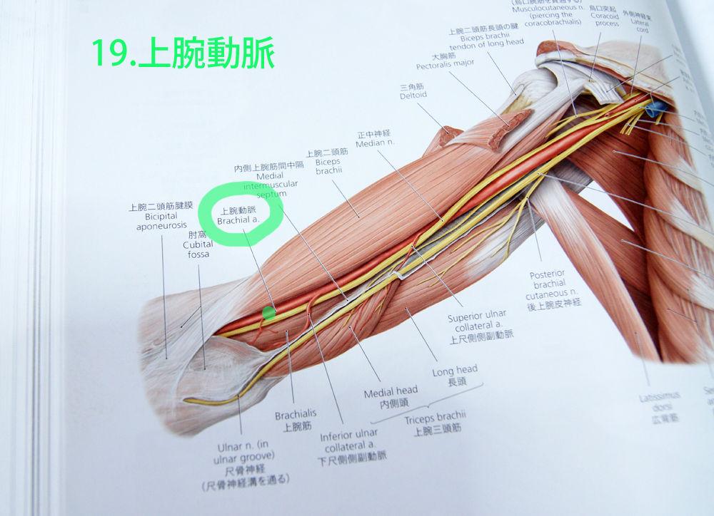 人體解剖學など。:2017年05月27日