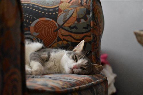 cute-cat-3807140_1280_R
