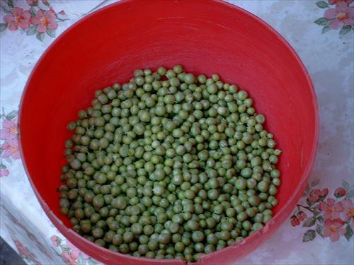 Green_peas_R