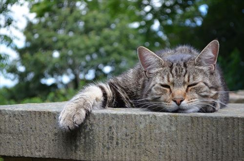 cats-168144_960_720_R
