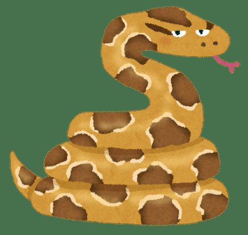 animal_nishikihebi